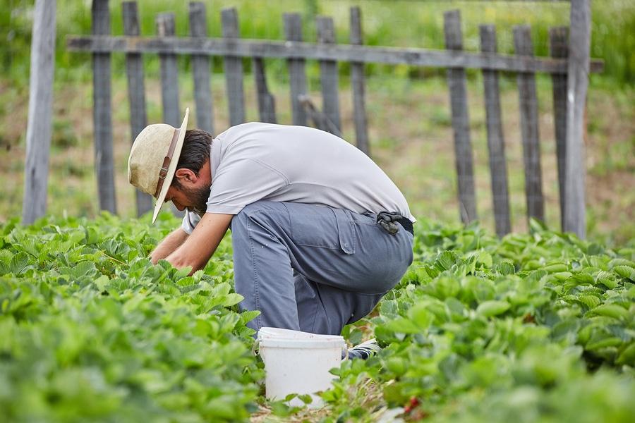 Aufzeichnung- und Dokumentationspflichten Landwirt bei ausländischen Arbeitnehmern